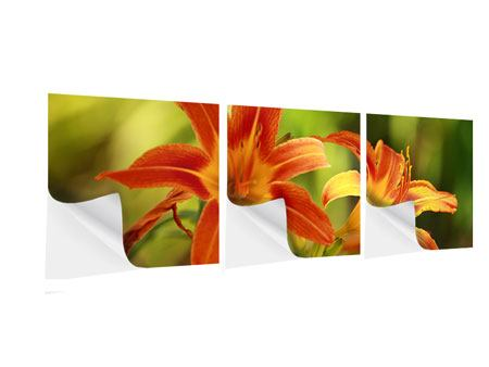 Panoramic 3 Piece Self-Adhesive Poster Natural Lilies