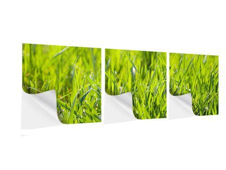 Panorama Klebeposter 3-teilig Gras im Morgentau