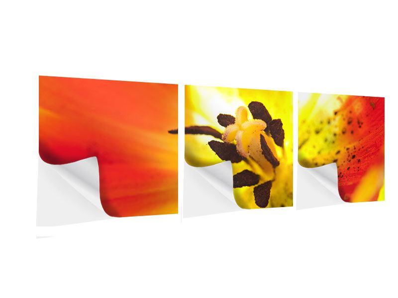 Panorama Klebeposter 3-teilig Die Narbe einer Tulpe XXL