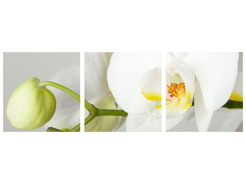 Panorama Klebeposter 3-teilig Riesenorchidee
