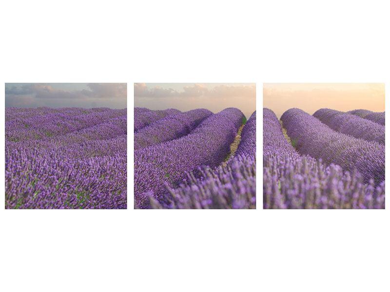 Panorama Klebeposter 3-teilig Das blühende Lavendelfeld
