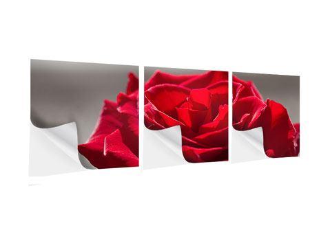 Panorama Klebeposter 3-teilig Rote Rosenblüte