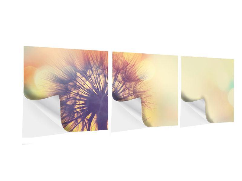 Panorama Klebeposter 3-teilig Die Pusteblume im Licht