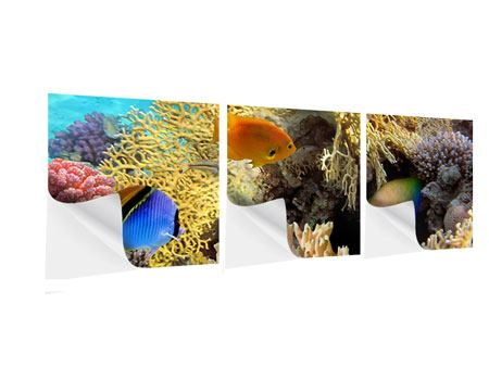 Panorama Klebeposter 3-teilig Fischreichtum