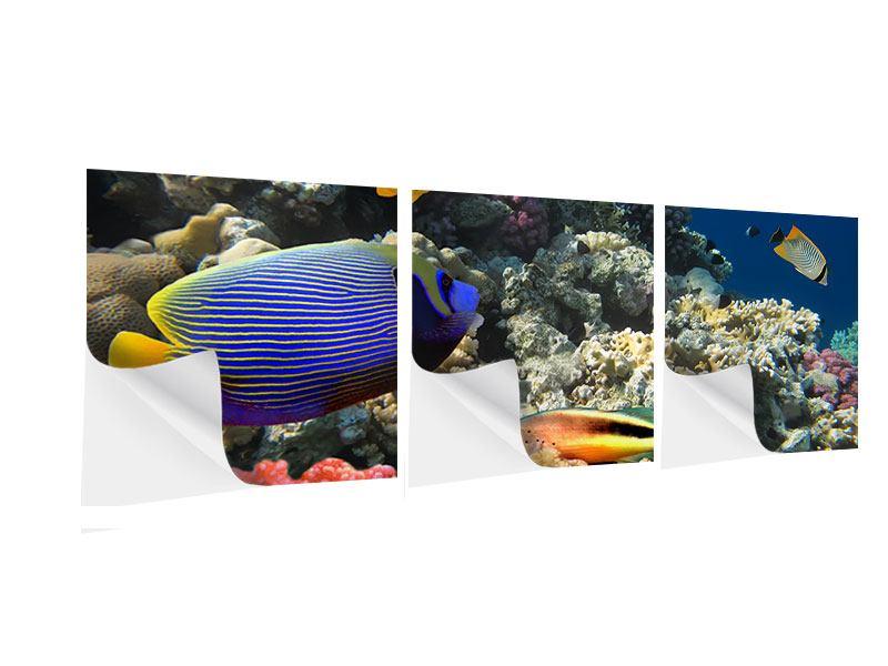 Panorama Klebeposter 3-teilig Das Aquarium