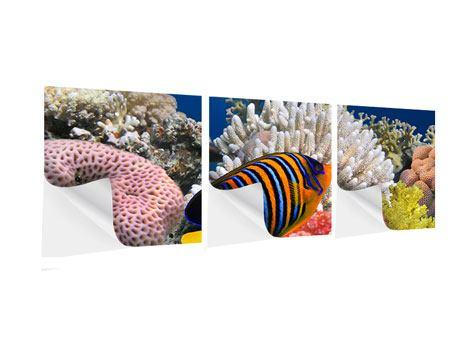 Panorama Klebeposter 3-teilig Mit den Fischen tauchen