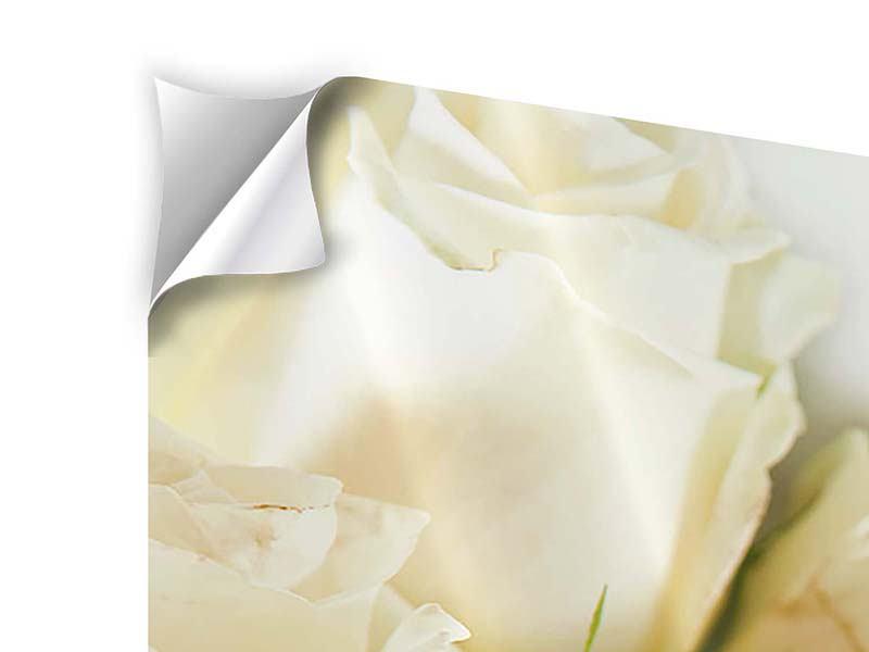 Panorama Klebeposter 3-teilig Weisse Rosen