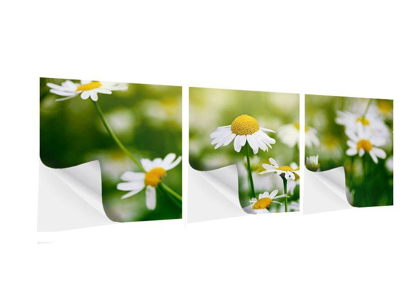 Panorama Klebeposter 3-teilig Die Gänseblümchen