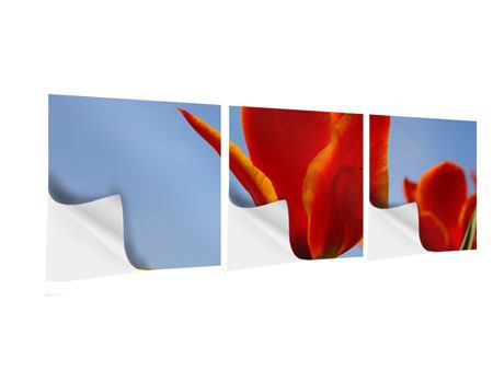 Panorama Klebeposter 3-teilig Rote Tulpen in XXL