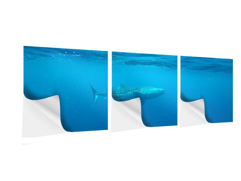 Panorama Klebeposter 3-teilig Der Walhai