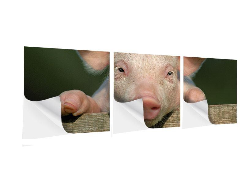 Panorama Klebeposter 3-teilig Schweinchen Namens Babe