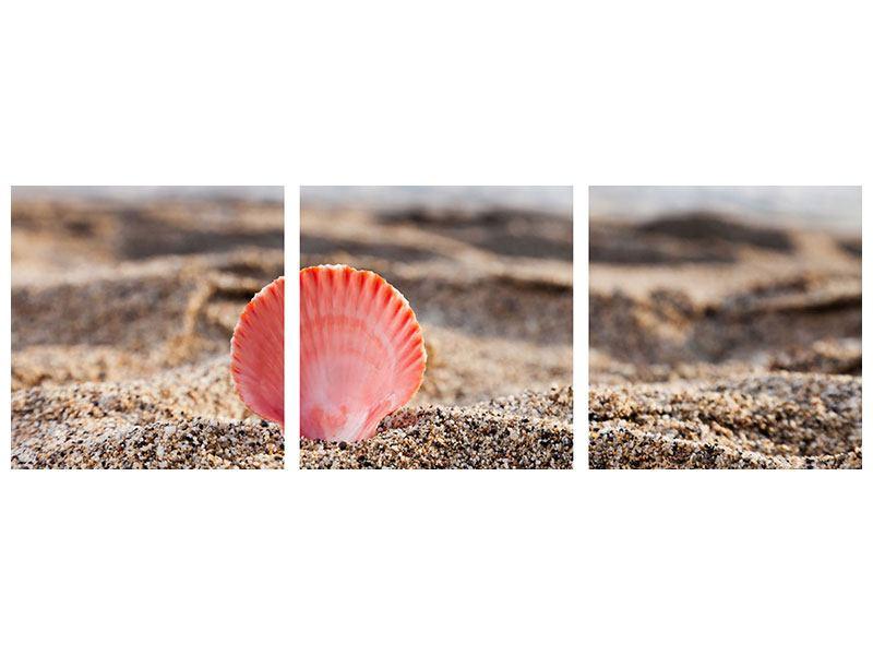 Panorama Klebeposter 3-teilig Die Muschel