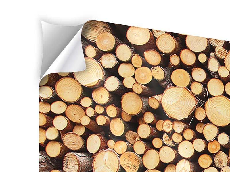 Panorama Klebeposter 3-teilig Holzstämme