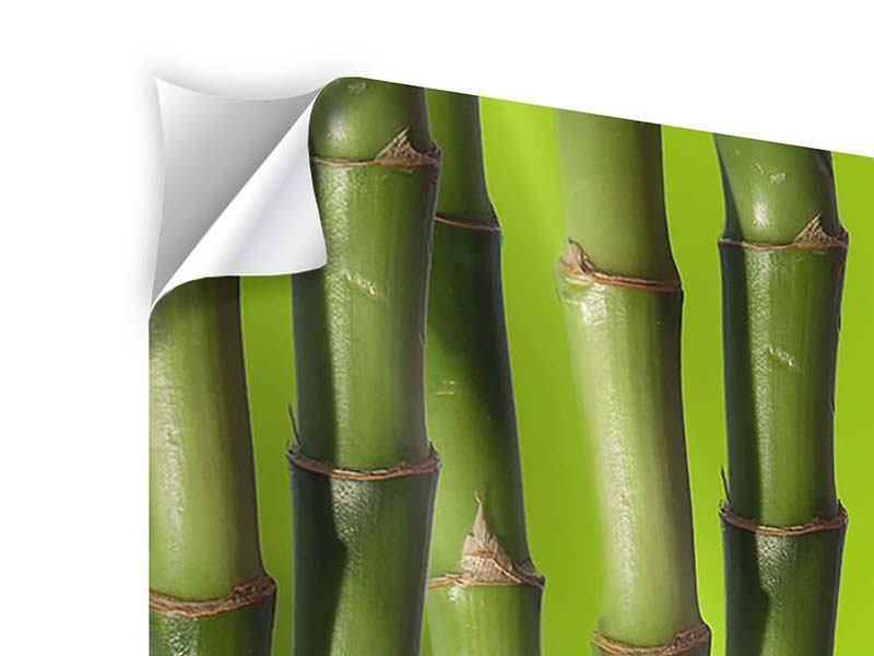 Panorama Klebeposter 3-teilig Der Bambus