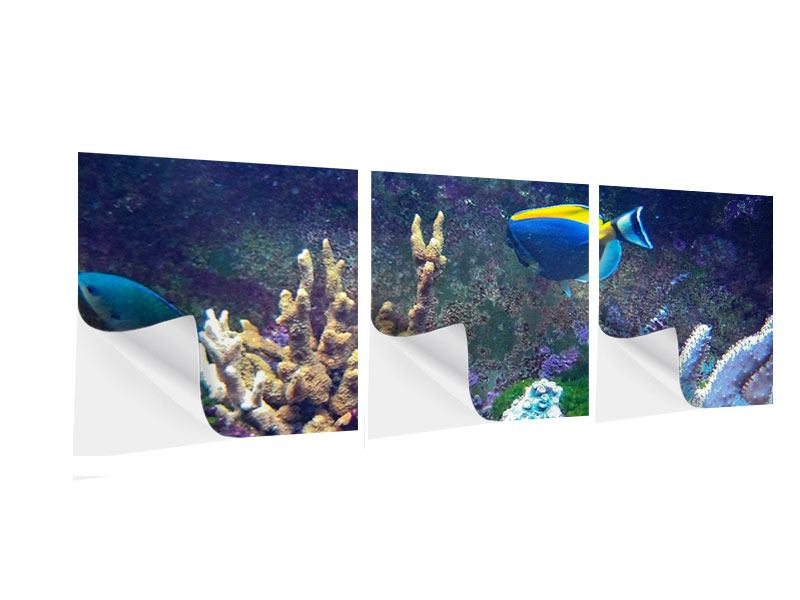 Panorama Klebeposter 3-teilig Fische