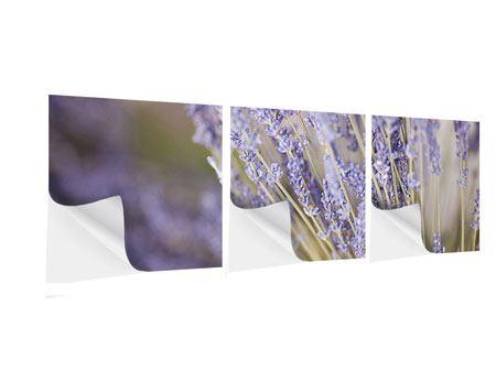 Panorama Klebeposter 3-teilig Lavendel XXL