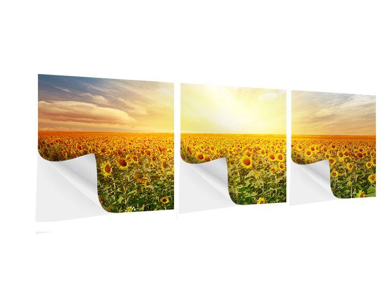 Panorama Klebeposter 3-teilig Ein Feld voller Sonnenblumen