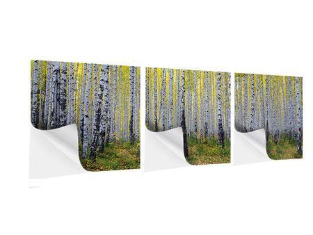 Panorama Klebeposter 3-teilig Herbstlicher Birkenwald