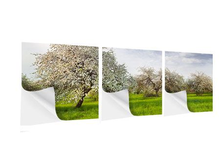 Panorama Klebeposter 3-teilig Apfelbaum-Garten