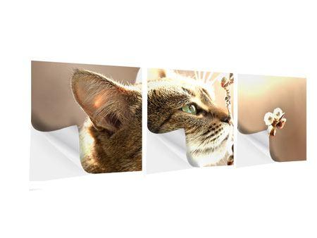 Panorama Klebeposter 3-teilig Die Katze