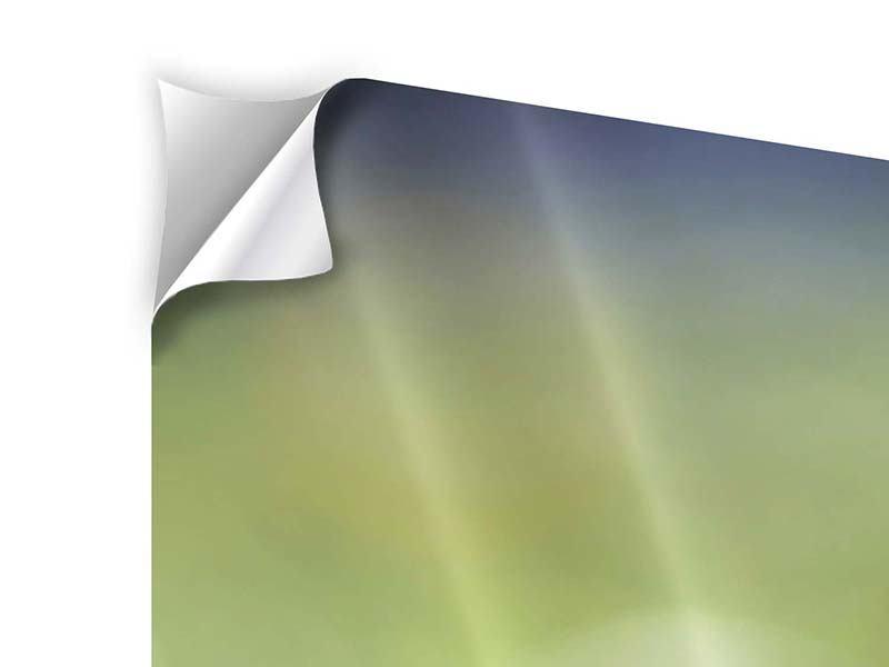 Panorama Klebeposter 3-teilig Die Blütenknospe