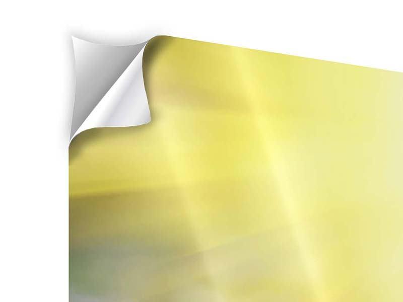Panorama Klebeposter 3-teilig Blumige Wiese