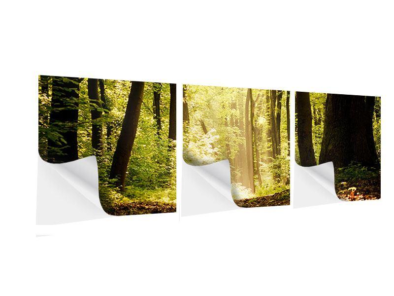 Panorama Klebeposter 3-teilig Sonnenaufgang im Wald