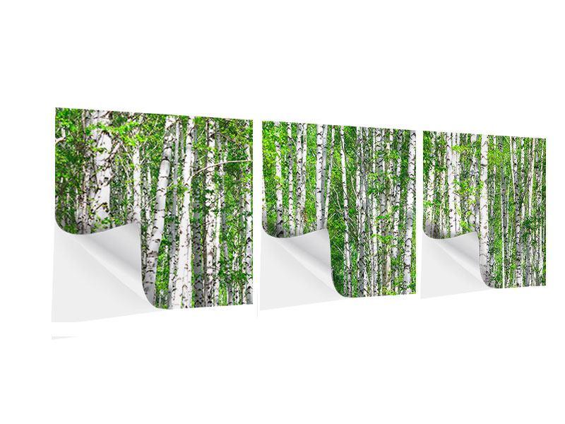 Panorama Klebeposter 3-teilig Der Birkenwald