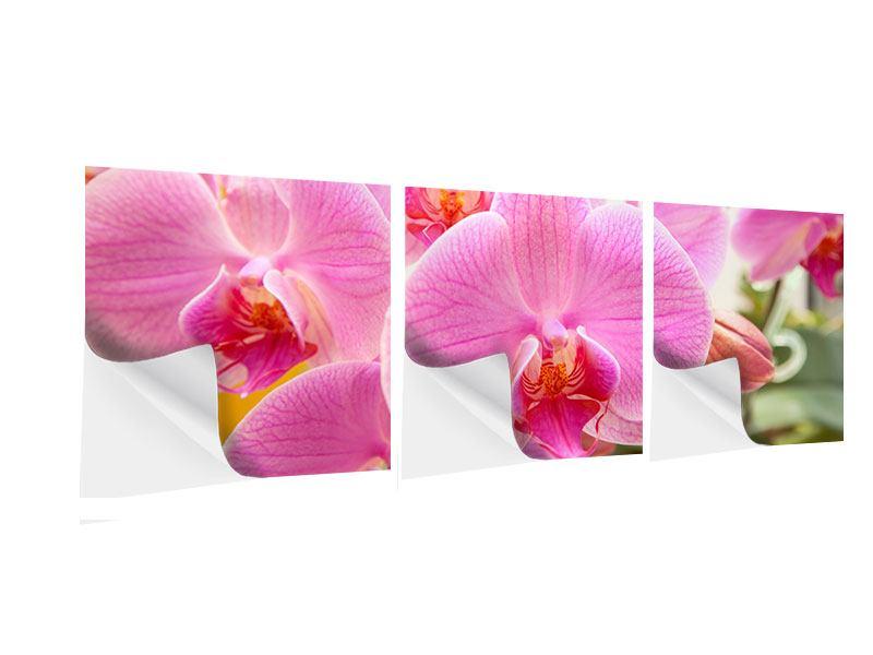 Panorama Klebeposter 3-teilig Königliche Orchideen