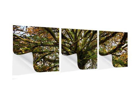 Panorama Klebeposter 3-teilig Mein Lieblingsbaum