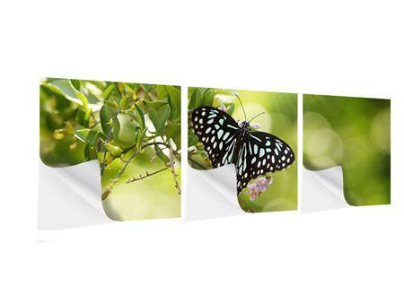 Panorama Klebeposter 3-teilig Papilio Schmetterling XXL