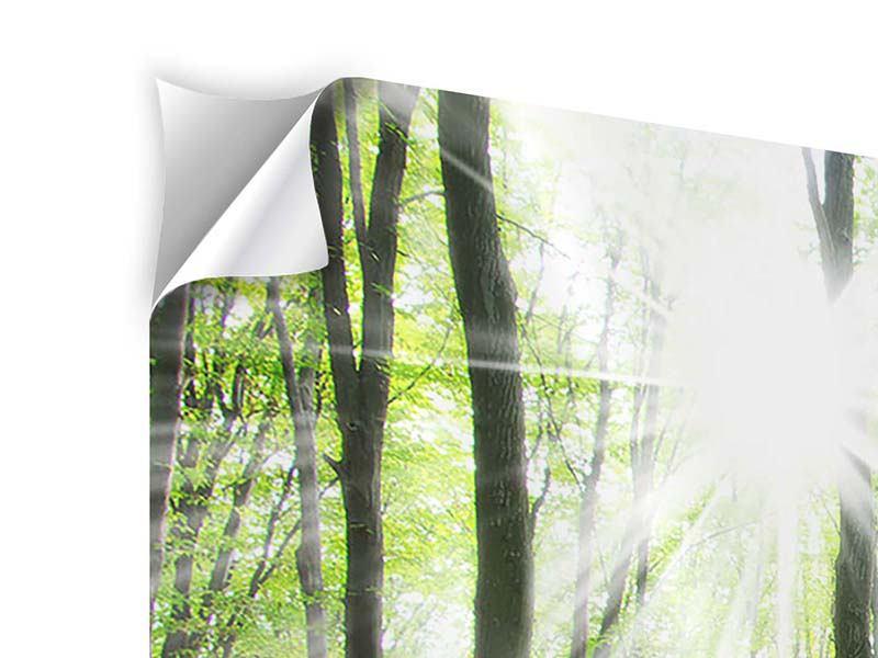 Panorama Klebeposter 3-teilig Magisches Licht in den Bäumen
