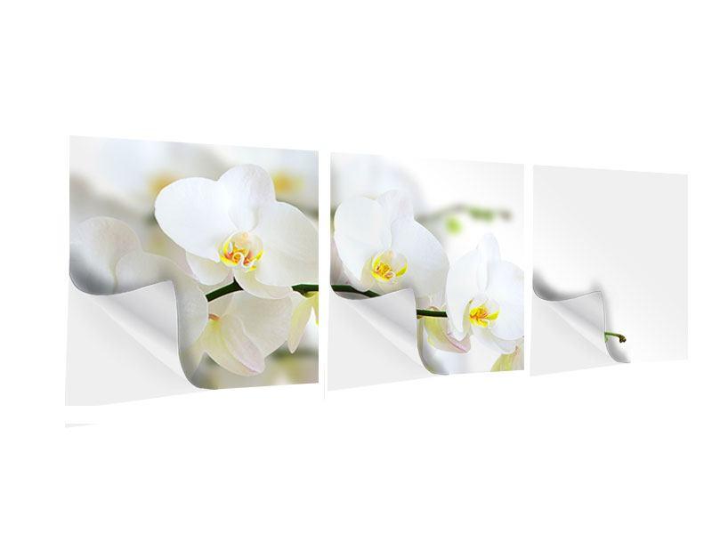 Panorama Klebeposter 3-teilig Weisse Orchideen