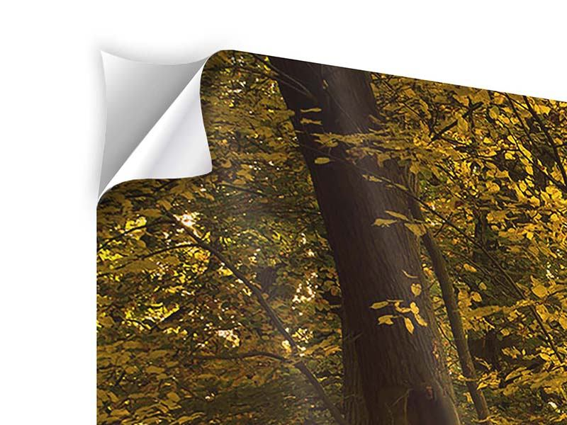Panorama Klebeposter 3-teilig Herbstlaub