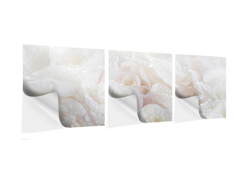 Panorama Klebeposter 3-teilig Weisse Rosen im Morgentau