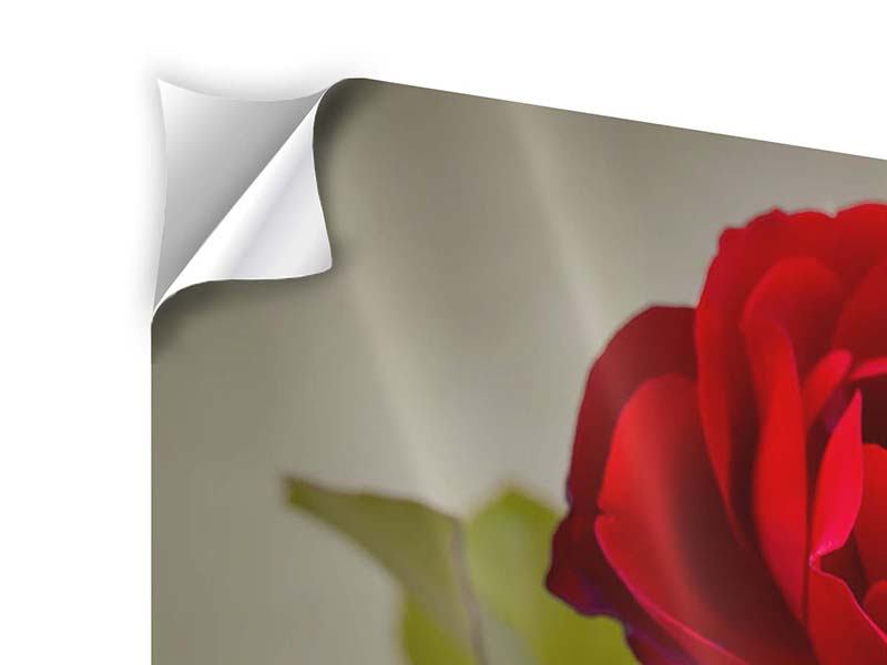 Panorama Klebeposter 3-teilig Drei rote Rosen