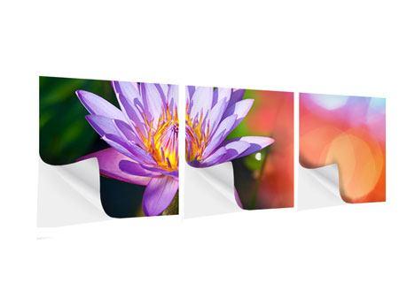 Panorama Klebeposter 3-teilig Colored Lotus