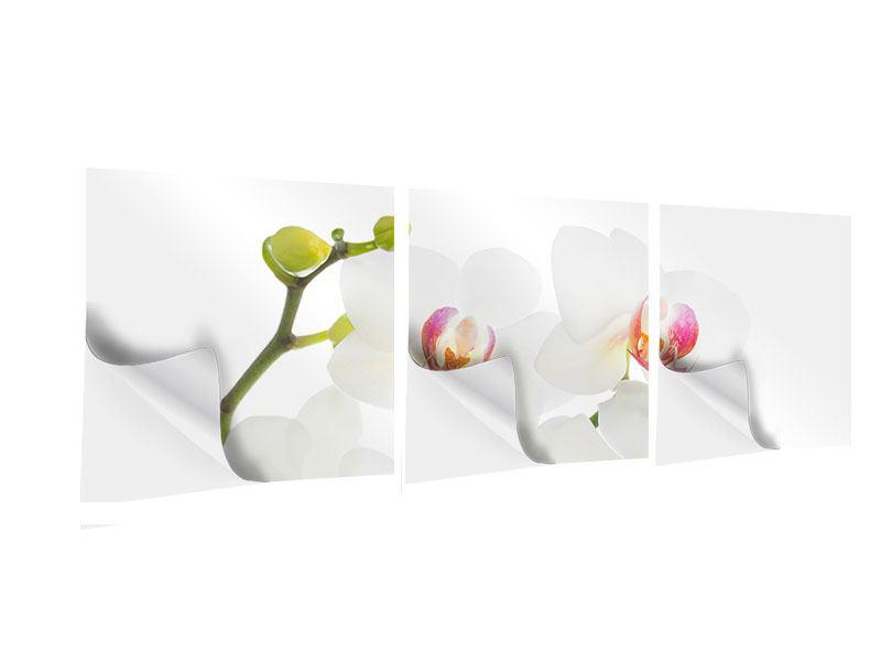 Panorama Klebeposter 3-teilig Orchideenliebe