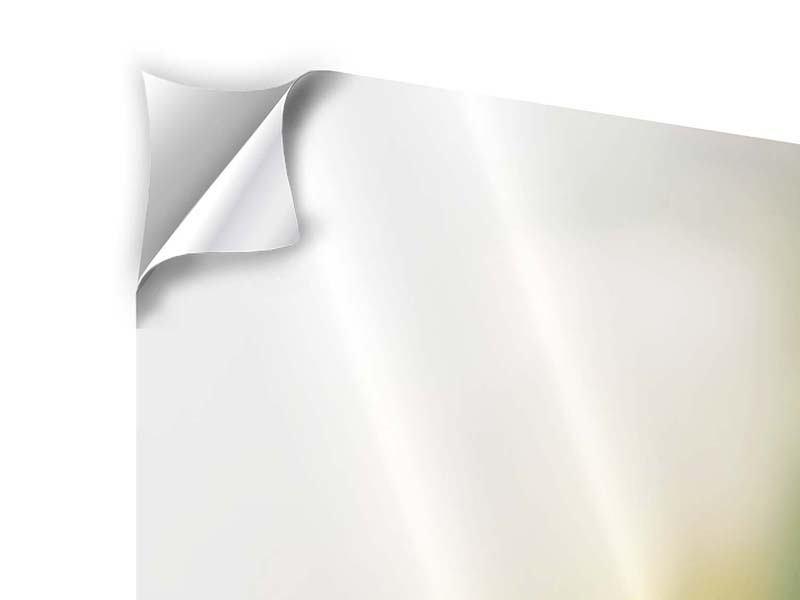 Panorama Klebeposter 3-teilig Tulpenperspektive