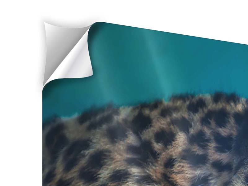 Panorama Klebeposter 3-teilig Leopard XL