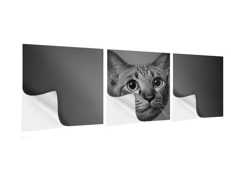 Panorama Klebeposter 3-teilig Katzenlady