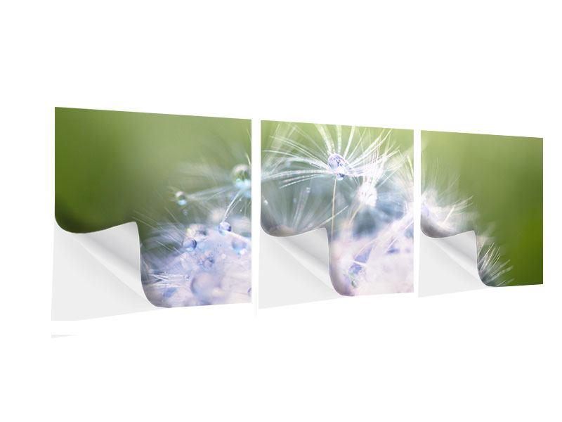 Panorama Klebeposter 3-teilig Pusteblume XL im Morgentau