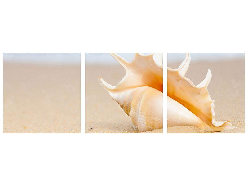 Panorama Klebeposter 3-teilig Die Muschel am Strand