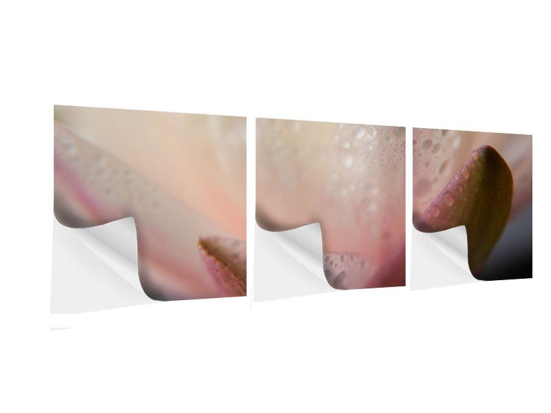 Panorama Klebeposter 3-teilig Close Up Seerose