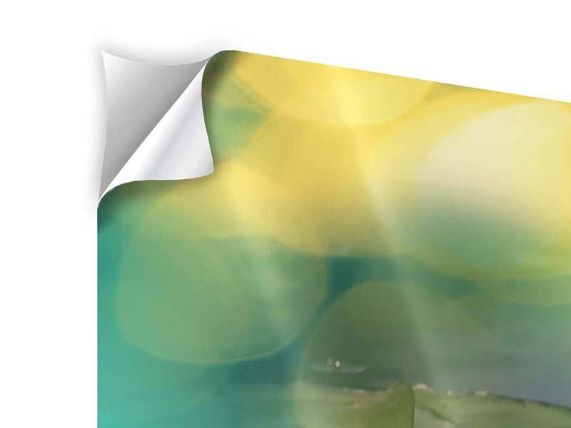 Panorama Klebeposter 3-teilig Lotus-Spiegelung