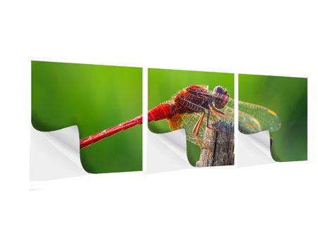 Panorama Klebeposter 3-teilig Libelle XXL
