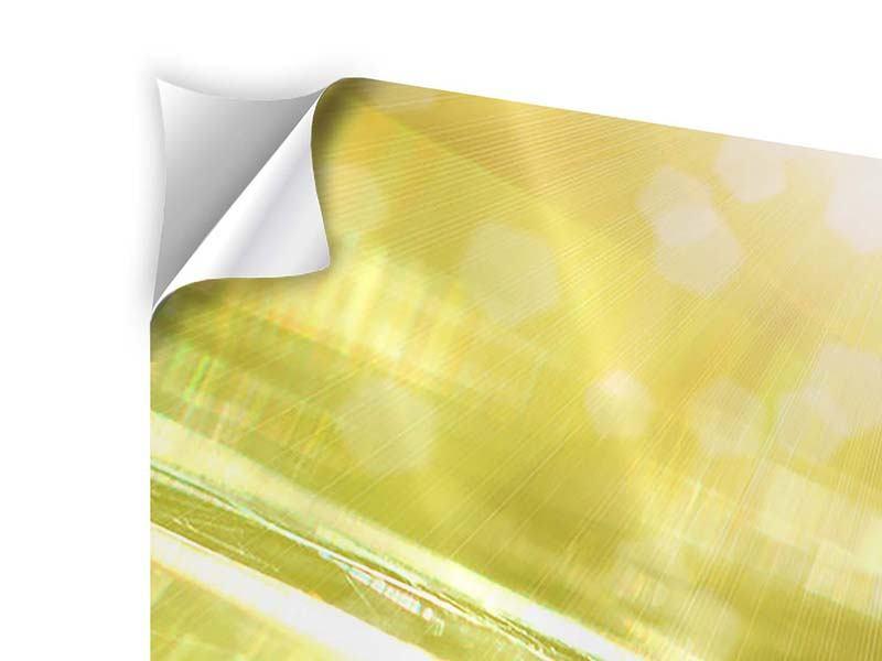 Panorama Klebeposter 3-teilig Marienkäfer im Sonnenlicht