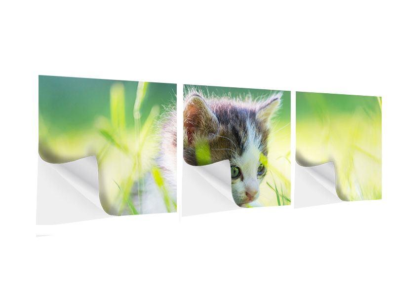 Panorama Klebeposter 3-teilig Kitten