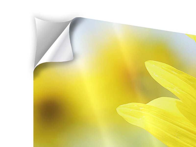 Panorama Klebeposter 3-teilig Die Blume der Sonne