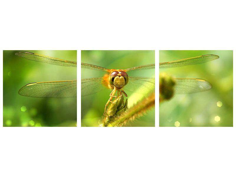 Panorama Klebeposter 3-teilig XXL-Libelle